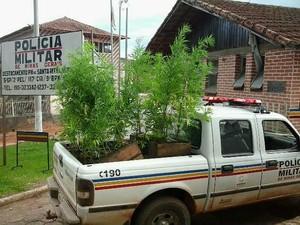 Apreensão maconha Santa Rita Ibitipoca 2 (Foto: PM Barbacena/ Divulgação)
