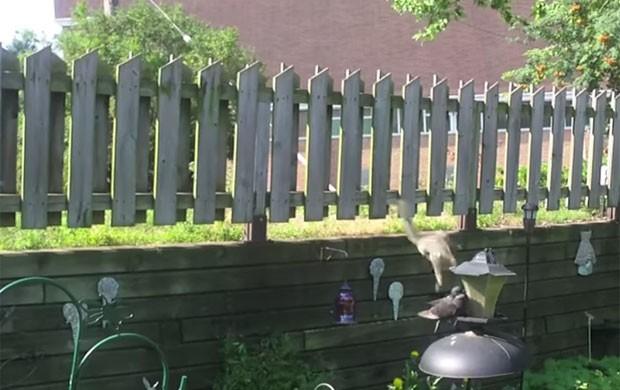 Esquilo saltou de uma cerca para alcançar o alimentador. (Foto: Reprodução/LiveLeak/Plokiju)