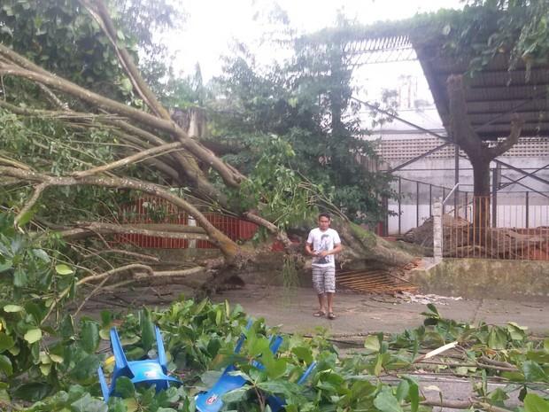 Árvore caiu dentro de uma escola. (Foto: Douglas Medeiros/Arquivo Pessoal)