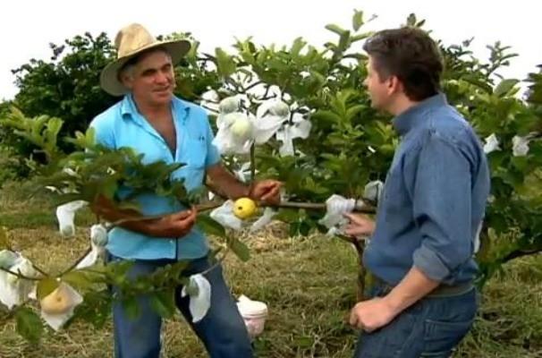 Produtores de goiaba da região são entrevistados pelo Globo Rural (Foto: Reprodução / TV Globo)
