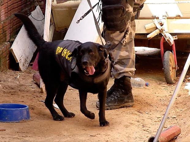 Cão farejador do BPChoque, Black ajudou a localizar o corpo em casa da Grande Natal (Foto: Reprodução/ Inter TV Cabugi)