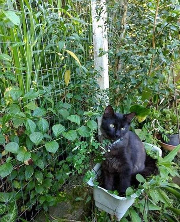 Gato preto <3 (Foto: Reprodução Instagram)