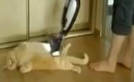 Gatinho tomando 'banho' de aspirador de pó vira hit no Youtube; assista (Vaccuming my cat: vídeo de gato sendo aspirado é o novo hit do YouTube (Foto: Reprodução/YouTube))