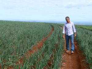 São José do Rio Pardo teve diminuição no plantio de cebola (Foto: Eder Ribeiro/EPTV)
