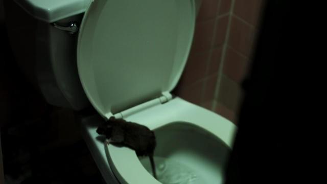 Depois de ver 'Rats', você nunca mais sentará na privada sem olhar (Foto: Reprodução/Youtube)