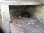 Moradora de Campo Grande encontra lontra no quintal de casa