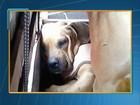 Filhote macho de cão é vendido como fêmea após ter órgão genital mutilado