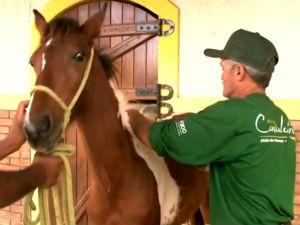 Cavalos mangalarga marchador  (Foto: Divulgação/TV Gazeta)