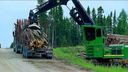 Florestas do Canadá têm desmatamento controlado