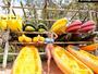 Karina Bacchi posa na praia e mostra gravidez de 15 semanas: 'Pra celebrar'