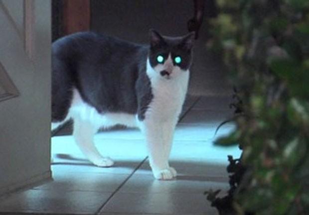 Temperamental, gato Cuppy ficou furioso e tentou atacar mulheres (Foto: Reprodução/YouTube/10 News)