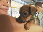 Campanha promove a adoo de animais abandonados, no Recife