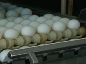 Ovos de galinha (Foto: Reprodução/ TV Asa Branca)