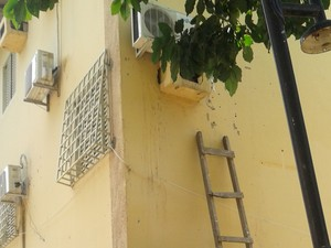 Insetos foram encontrados dentro da caixa de um ar condicionado em um prédio na área urbana de Boa Vista (Foto: IOC/Fiocruz/Divulgação)