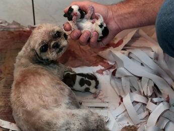 Operação encontrou indícios de que cães eram criados para comércio (Foto: Jaelson Lucas/ Divulgação SMCS)