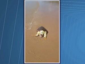 Segundo moradores, morte de animais é causada por pesca predatória de lagosta (Foto: Reprodução/TV Santa Cruz)