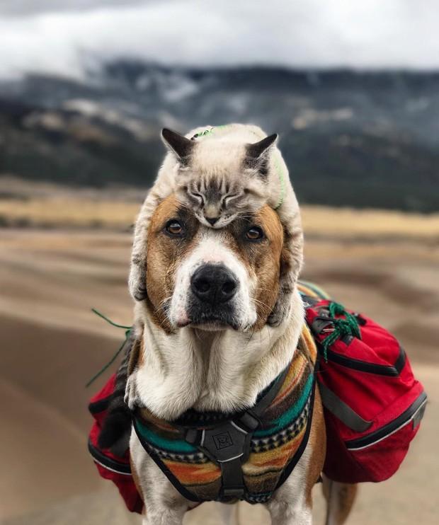 Harry-Baloo-cachorro-gato-amigos-viajantes-colorado (Foto: Reprodução / Instagram)