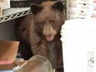 Em cena à la 'Zé Colmeia', filhote de urso invade pizzaria nos EUA