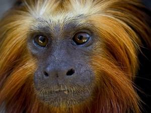 zoológico de salvador (Foto: Janduari Simões / Divulgação Zoológico)