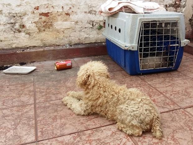 Doze animais foram encontrados com sinais de maus tratos (Foto: Adolfo Lima / TV TEM)