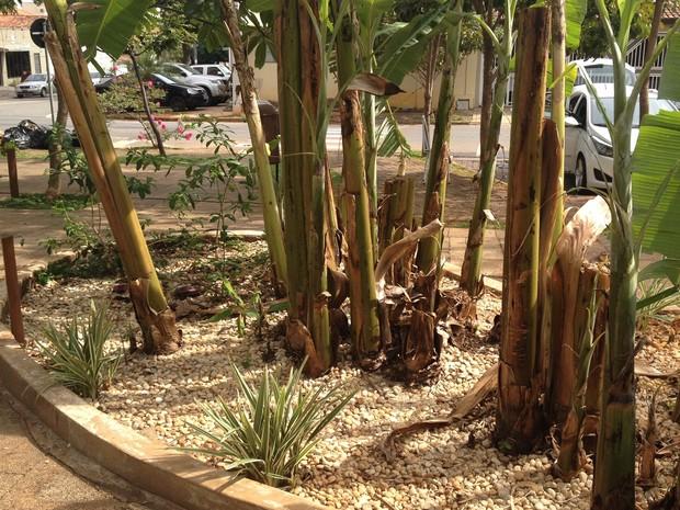Fossa ecológica foi instalada em praça para servir de modelo, em Goiânia, Goiás (Foto: Fernanda Borges/G1)