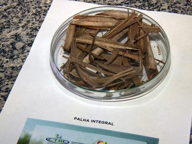 Palha da cana de açúcar sem queima no laboratório de Campinas (Foto: Reprodução EPTV)