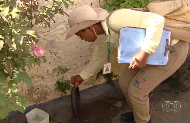 Agentes vistoriam imóveis para combater o mosquito transmissor da dengue em Goiânia, Goiás (Foto: Reprodução/ TV Anhanguera)
