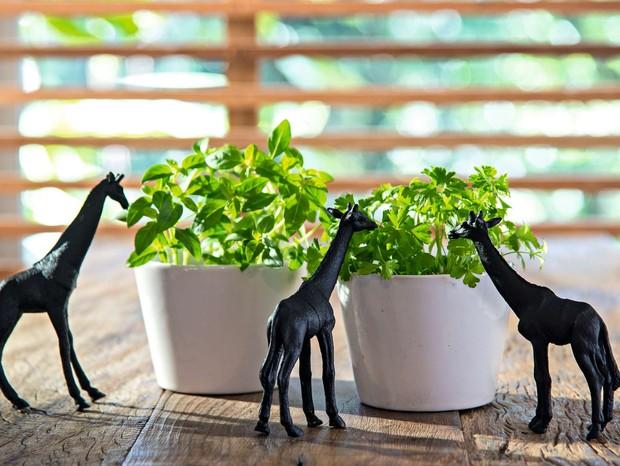 Os vasinhos brancos e básicos com ervas viram uma atração com girafas de plástico  pintadas com tinta acrílica preta, fazendo uma boquinha na horta caseira (Foto: Cacá Bratke/Editora Globo)