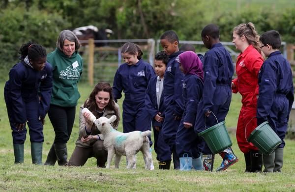 Kate Middleton amamenta ovelha em fazenda no oeste da Inglaterra (Foto: Getty Images)
