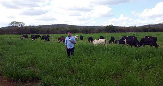 Produção leiteria em Oeiras e região é um dos destaques do programa  (Foto: TV Clube)