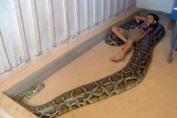 Sambath até dorme com a cobra (Foto: TV Globo)