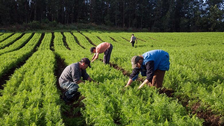 agricultura-familiar (Foto: MDA/Divulgação)