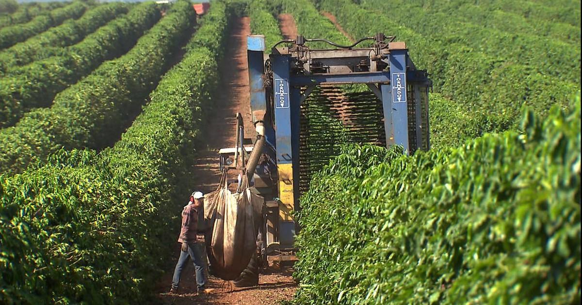Globo Rural Fazendas Usam Novas T 233 Cnicas Para