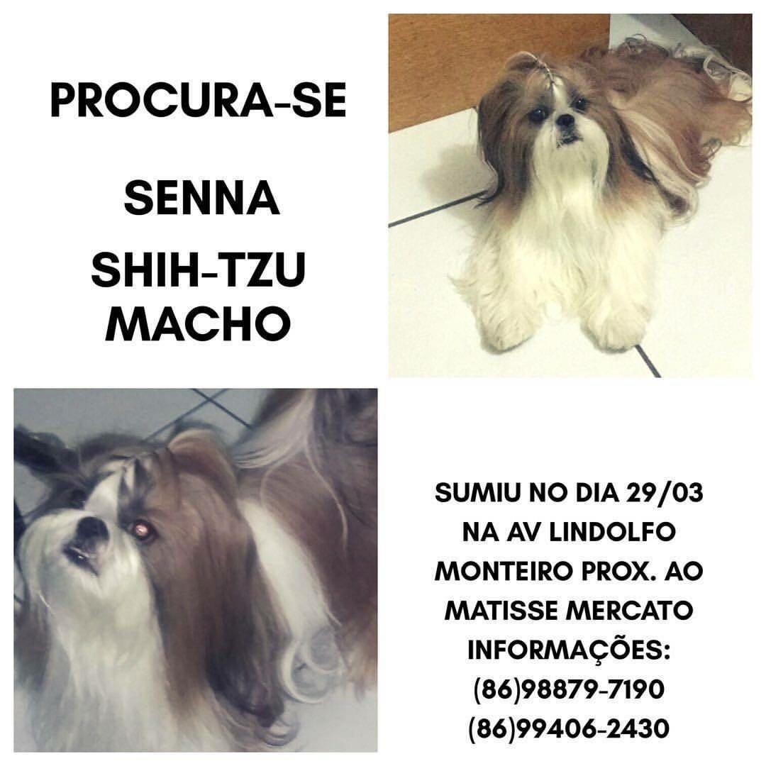 Família pede ajuda para localizar cão furtado na Zona Leste de Teresina (Foto: Reprodução)