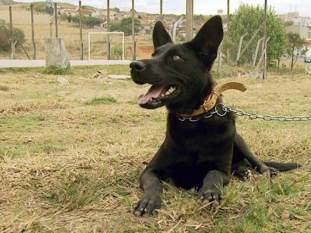 Cães abandonados irão receber chip de identificação em Poços de Caldas (Foto: Reprodução EPTV / Marcelo Rodrigues)