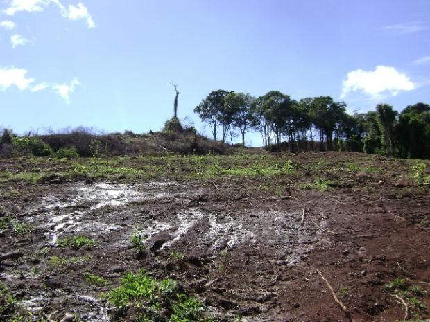 Polícia localiza quase 87 hectares de mata nativa desmatada no Paraná (Foto: Divulgação / Polícia Militar Ambiental)