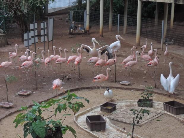 Flamingo deve voltar em breve ao recinto em que vivia com outras aves (Foto: Tássia Lima / G1)