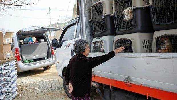 Aos poucos, muitos estão deixando de comer carne canina na Coreia do Sul e começando a ter cães como animais de estimação  (Foto: Change For Animals Foundation)
