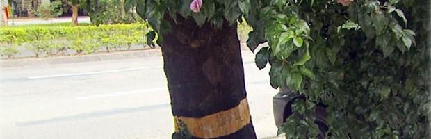 Tentativa de matar árvore Poços de Caldas (Foto: Reprodução EPTV)