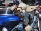 Cão faz sucesso ao passear de Harley-Davidson com dono nos EUA