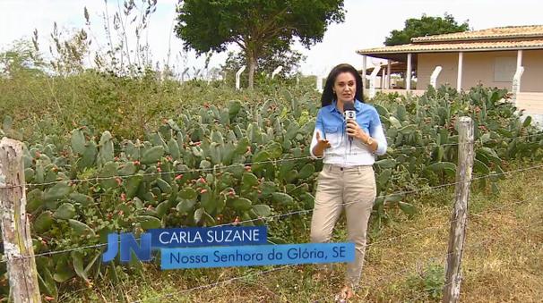 Repórter Carla Suzanne participou do Jornal Nacional (Foto: Divulgação / TV Sergipe)