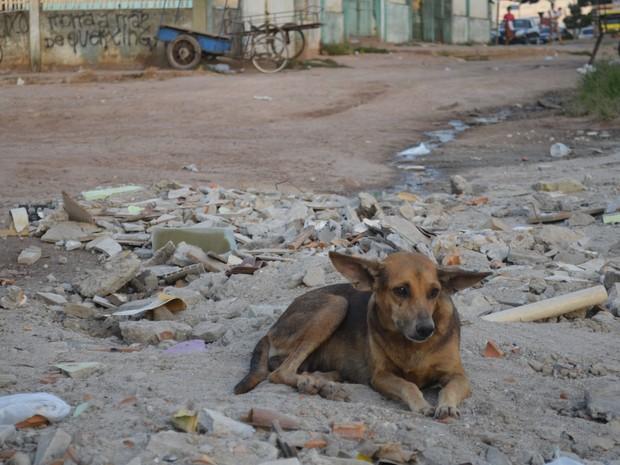 Campanha Barriguinha Cheia quer garantir alimentos aos animais abandonados (Foto: Dyepeson Martins/G1)
