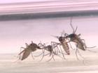Há risco de surto de dengue em 91 municípios, aponta pesquisa