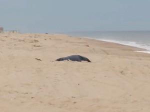 Corpo de Rian Brito foi achado na areia (Foto: Reprodução / Globo)