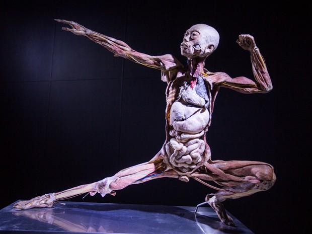 Um corpo da mostra Human Bodies (Foto: Divulgação/Diego Migotto)