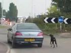 Motorista é visto puxando cão enquanto dirigia no País de Gales