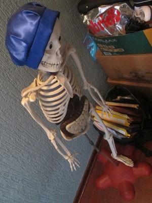Esqueleto para estudos dentro do apartamento do casal Martins (Foto: Kleber Tomaz / G1)