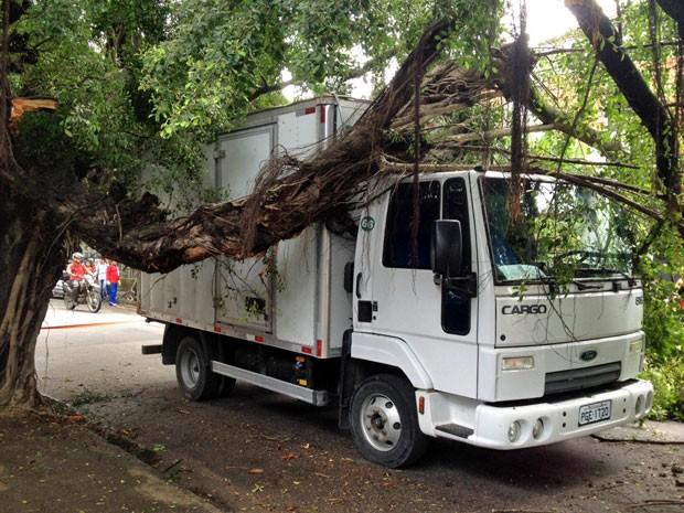 Segundo a CTTU, árvore caiu em cima do caminhão nas proximidades da Faculdade IBGM, por volta das 11h (Foto: Kety Marinho / TV Globo)