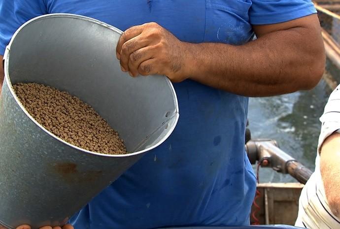 Peixes são bem alimentados para estarem mais que saudáveis na hora da venda (Foto: Reprodução / TV TEM)