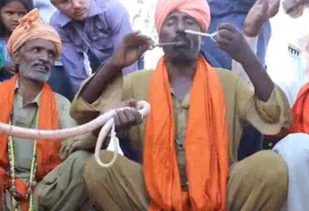 Encantador de serpentes colocou cobra venenosa pelo nariz e a retirou pela boca (Foto: Reprodução/YouTube/World News)